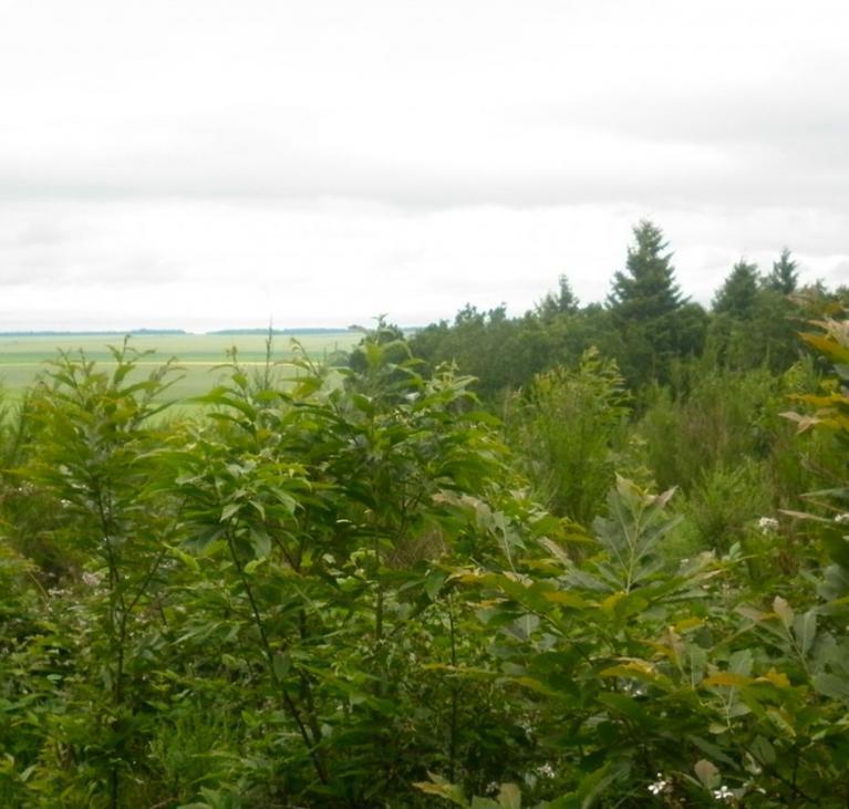 Vue forêt Montaiguillon